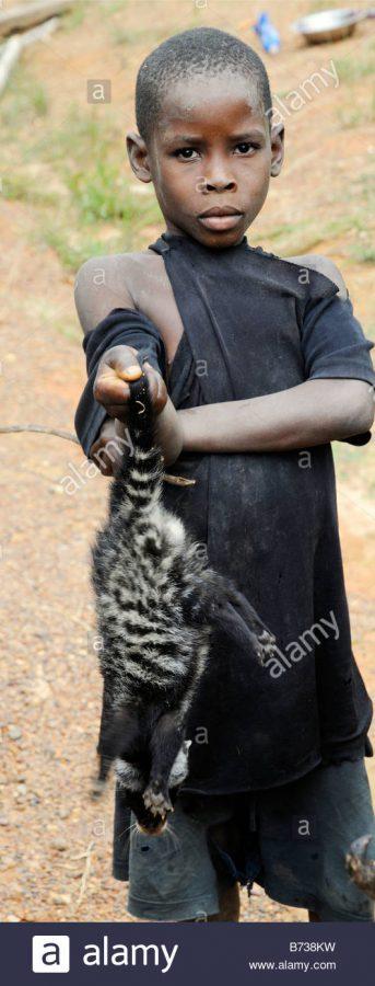 alamy.com_comp_B738KW_live-african-civet-as-bushme