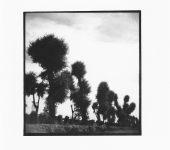 wiegmann-peking-fotos-1936-6x6_0003