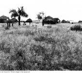 Himmelh.1938-39,Pende-Dorf in der Savanne