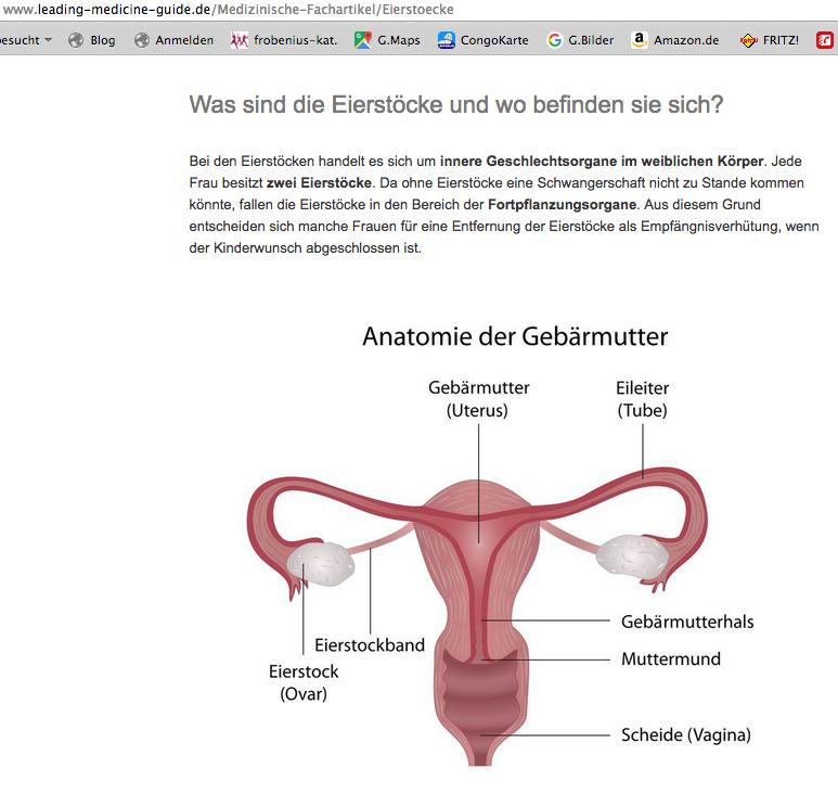 Atemberaubend Anatomie Der Gebärmutter Und Des Gebärmutterhalses ...